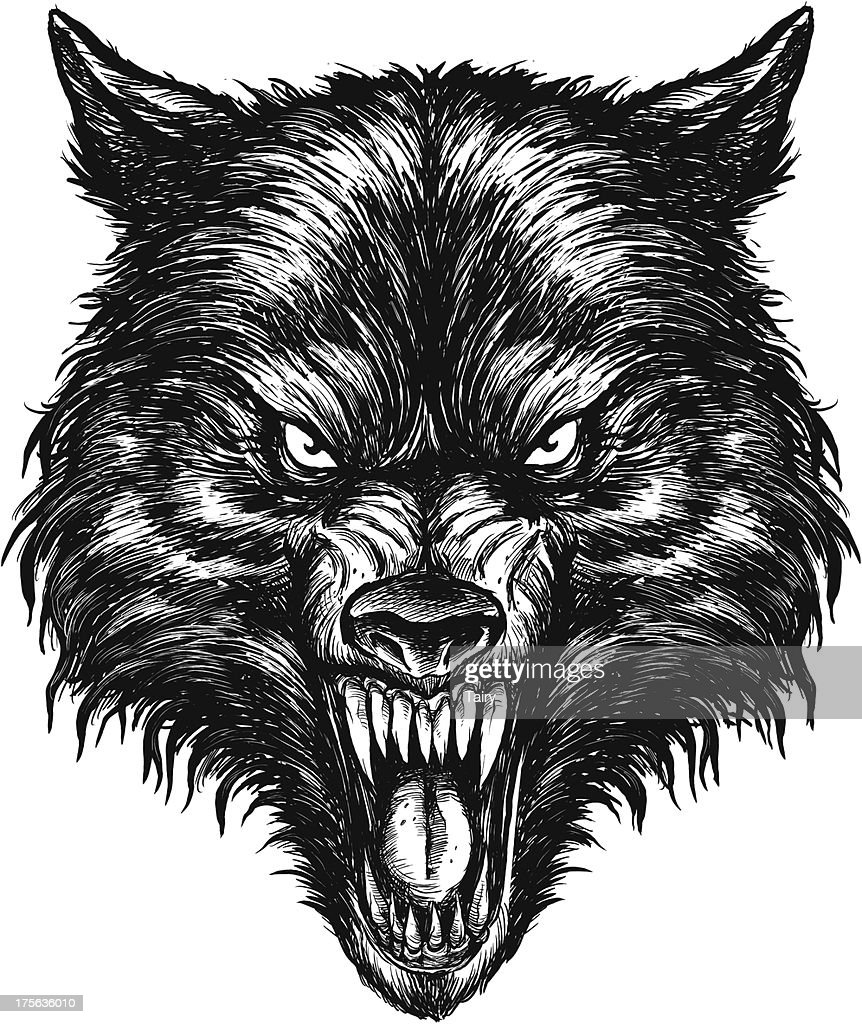 Hand drawn Wolf Vector Illustration
