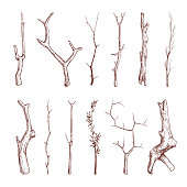 Hand drawn wood twigs, wooden sticks, tree branches vector rustic decoration elements