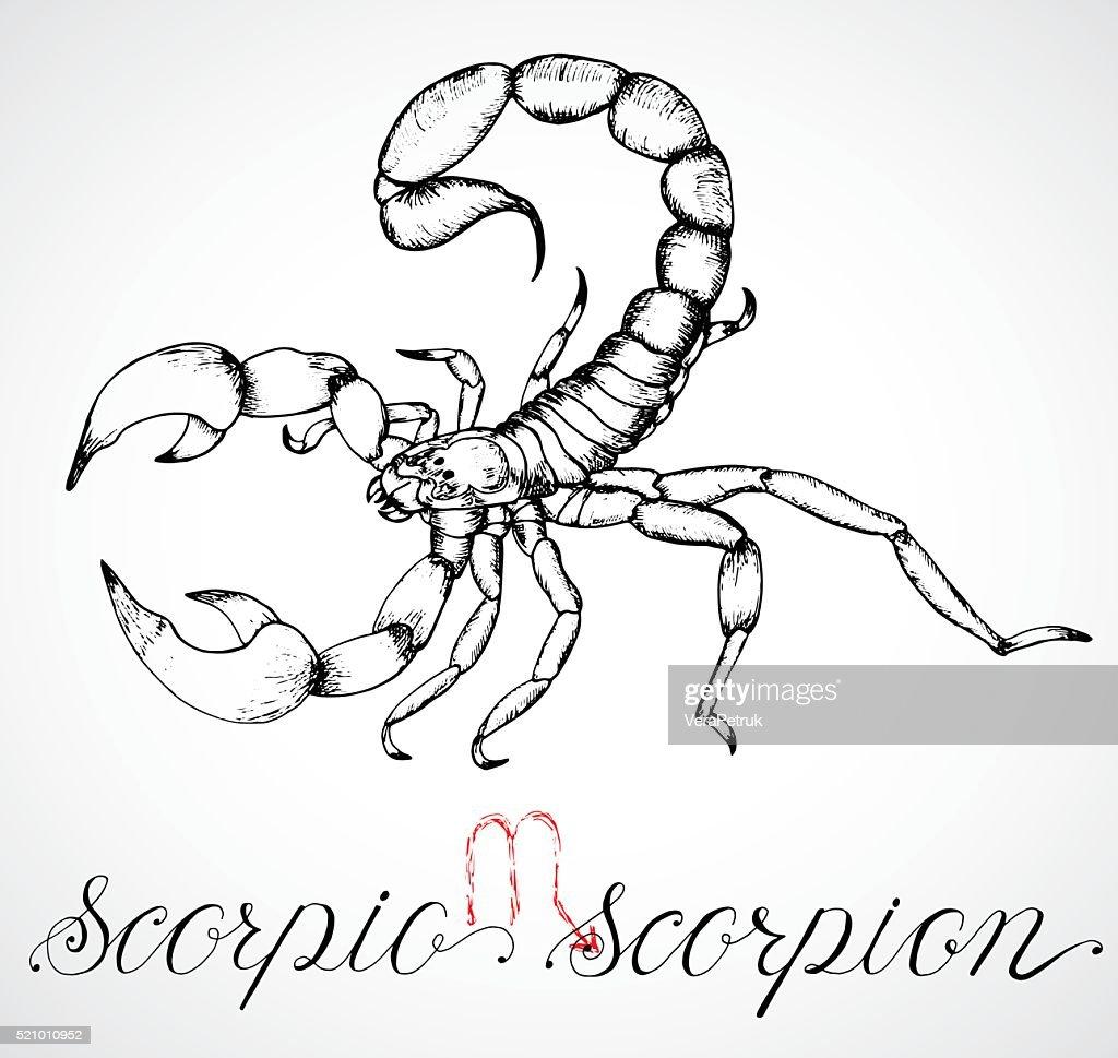 Hand drawn zodiac sign Scorpio or Scorpion