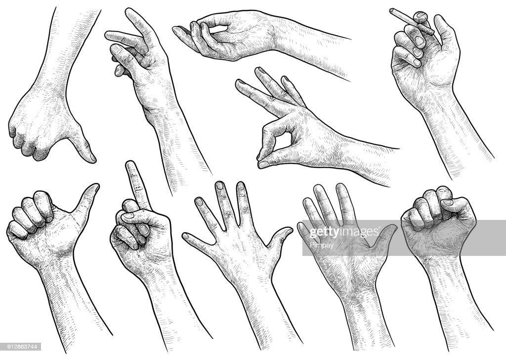 Hand gesture collection illustration, drawing, engraving, ink, line art, vector
