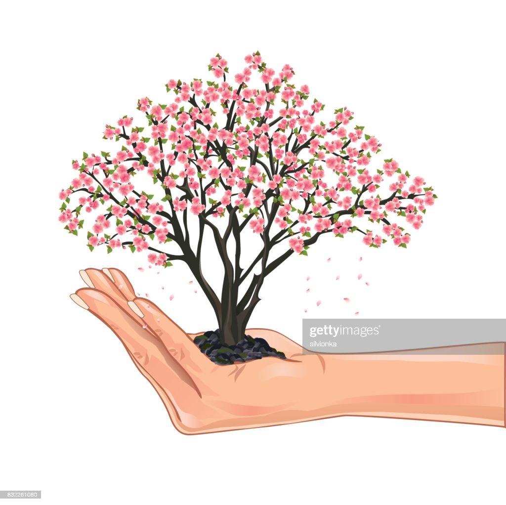 Hand holding a cherry tree blossom