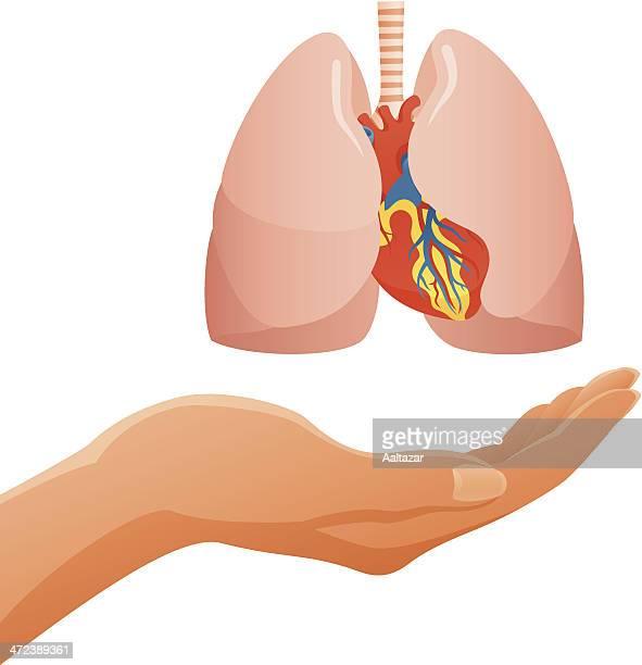 hand holding human lungs & heart - medical ventilator stock illustrations, clip art, cartoons, & icons