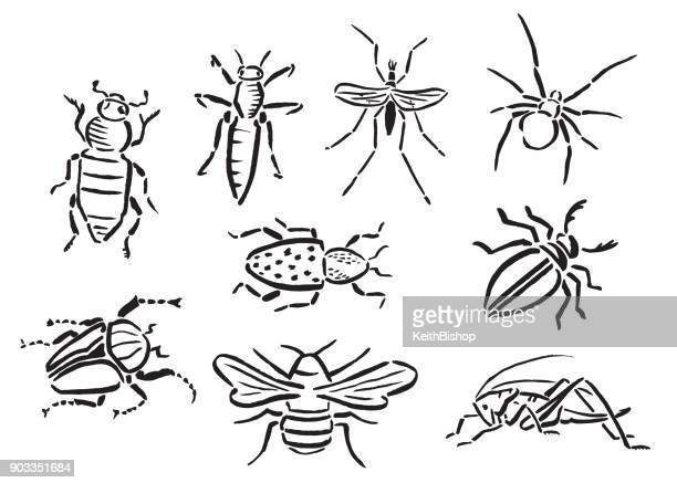 illustrazioni stock, clip art, cartoni animati e icone di tendenza di insetti o insetti bianchi e neri dipinti a mano - grillo insetto
