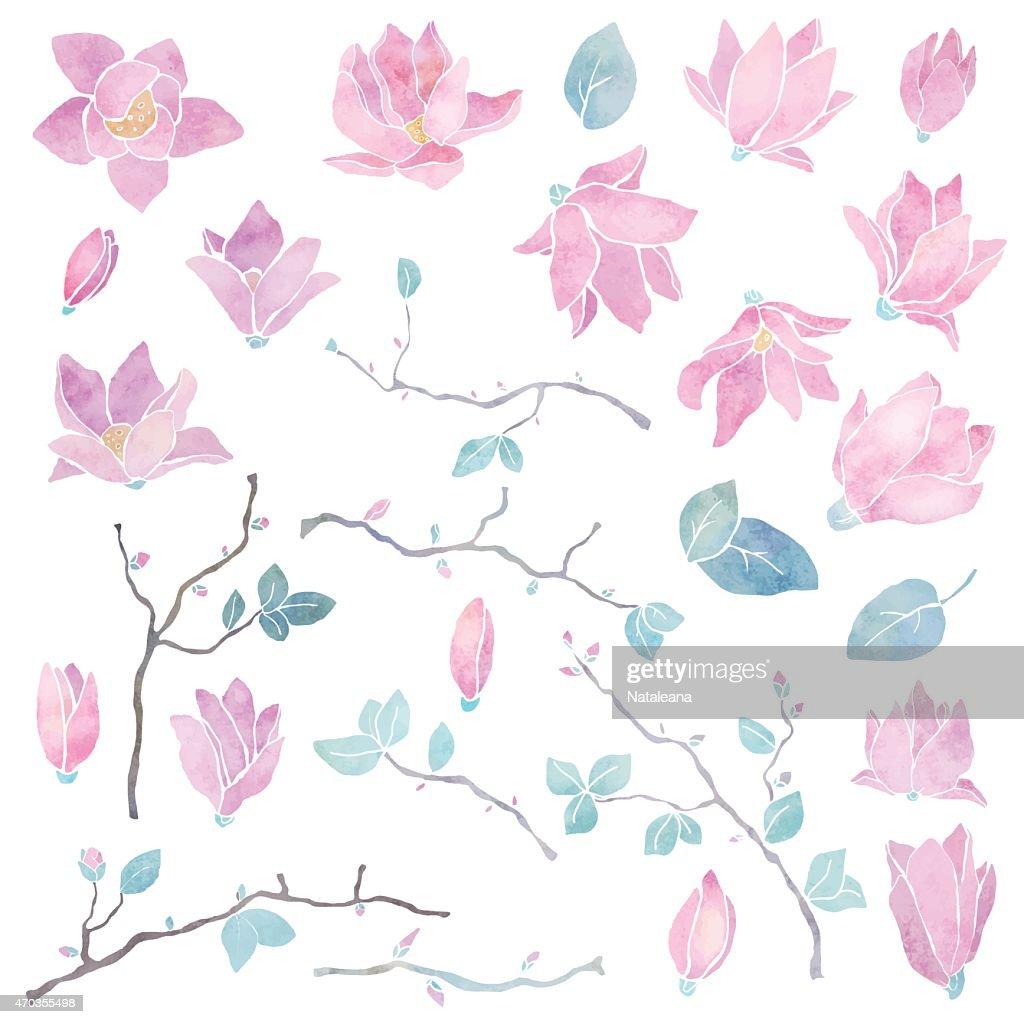 Hand painted magnolia flowers set
