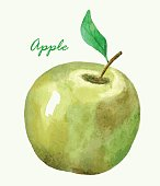 Hand painted watercolor apple