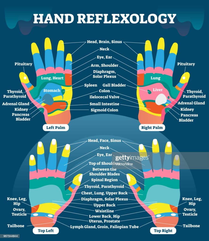 Hand reflexology massage therapy medical vector illustration chart. Human well being system. Inner organs and glands diagram.