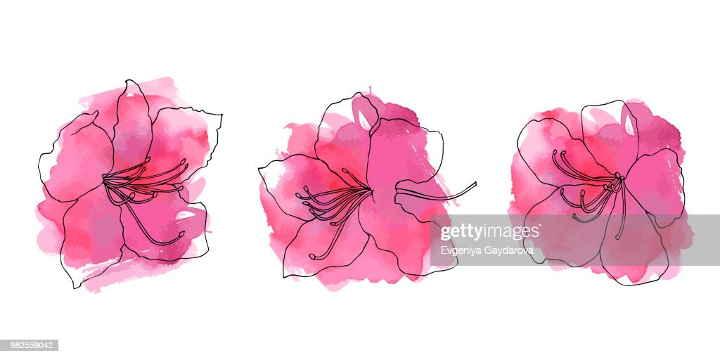 Hand sketched color set of rhododendron