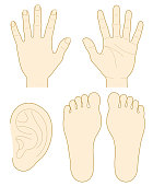 hand, the sole of a foot, ear.