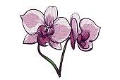 Handdrawn lilac orchid