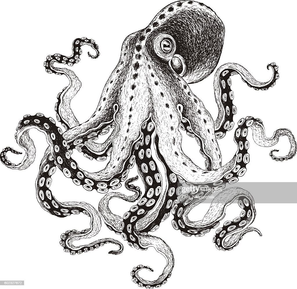Hand-drawn Octopus, vector illustration.