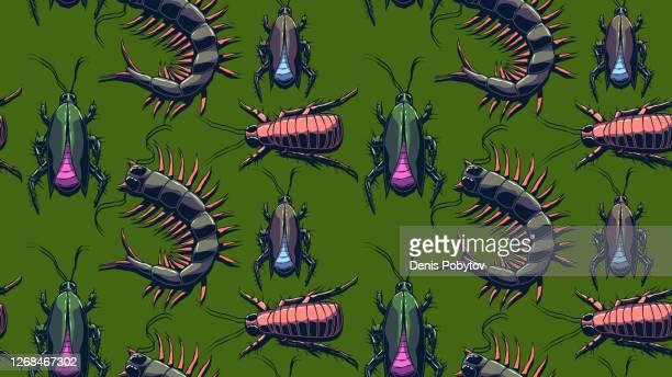 ilustrações de stock, clip art, desenhos animados e ícones de hand-drawn seamless illustration - creeping insects. - centopeia