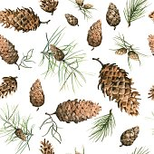 Hand-Drawn seamless pattern with pine cones and branches of coniferous evergreen tree. Design decor background. Card. Illustration