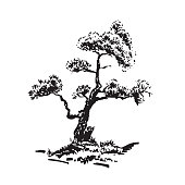 Hand-drawn tree, pine. Black and white realistic image, sketch painted with ink brush.