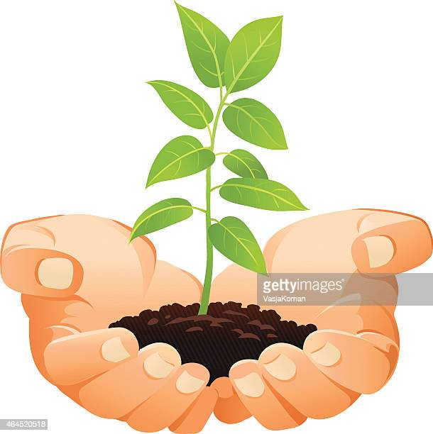 Hands Holding Small Seedling - Gardening