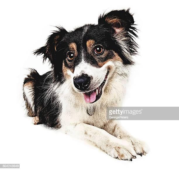 Happy Hund Ausschnitt