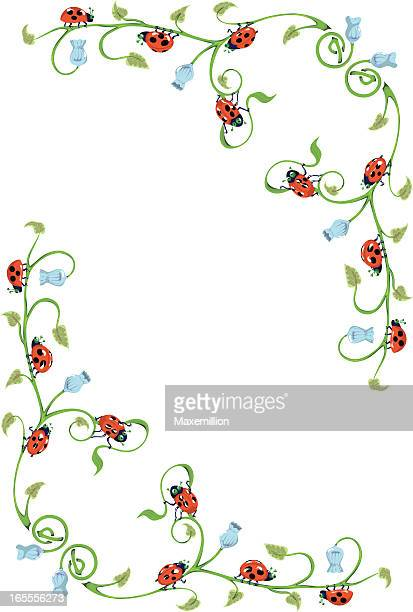 Illustrations et dessins anim s de coccinelle getty images - Campanule a feuilles rondes ...