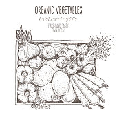 Harvest of vegetables in the box. Hand drawn vector illustration. Engraved style. Top view