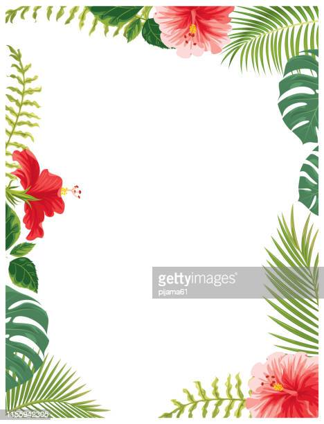 hawaii flowers and plants - tropical flower stock illustrations