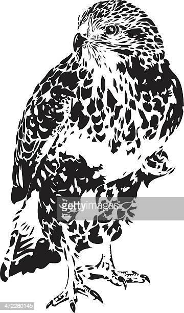 hawk illustration in b&w - falcons stock illustrations, clip art, cartoons, & icons