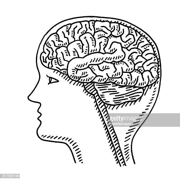ilustrações, clipart, desenhos animados e ícones de desenho de cabeça de cérebro ciência - cabeça humana