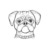 Head Dog pug hand-painted portrait. Black and white. Outline.