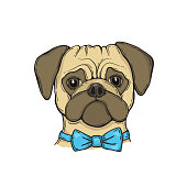 Head Dog pug with bow tie, hand-painted portrait.