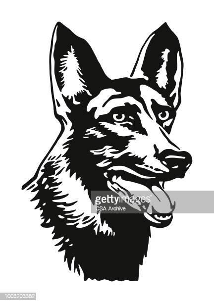 head of a dog - german shepherd stock illustrations