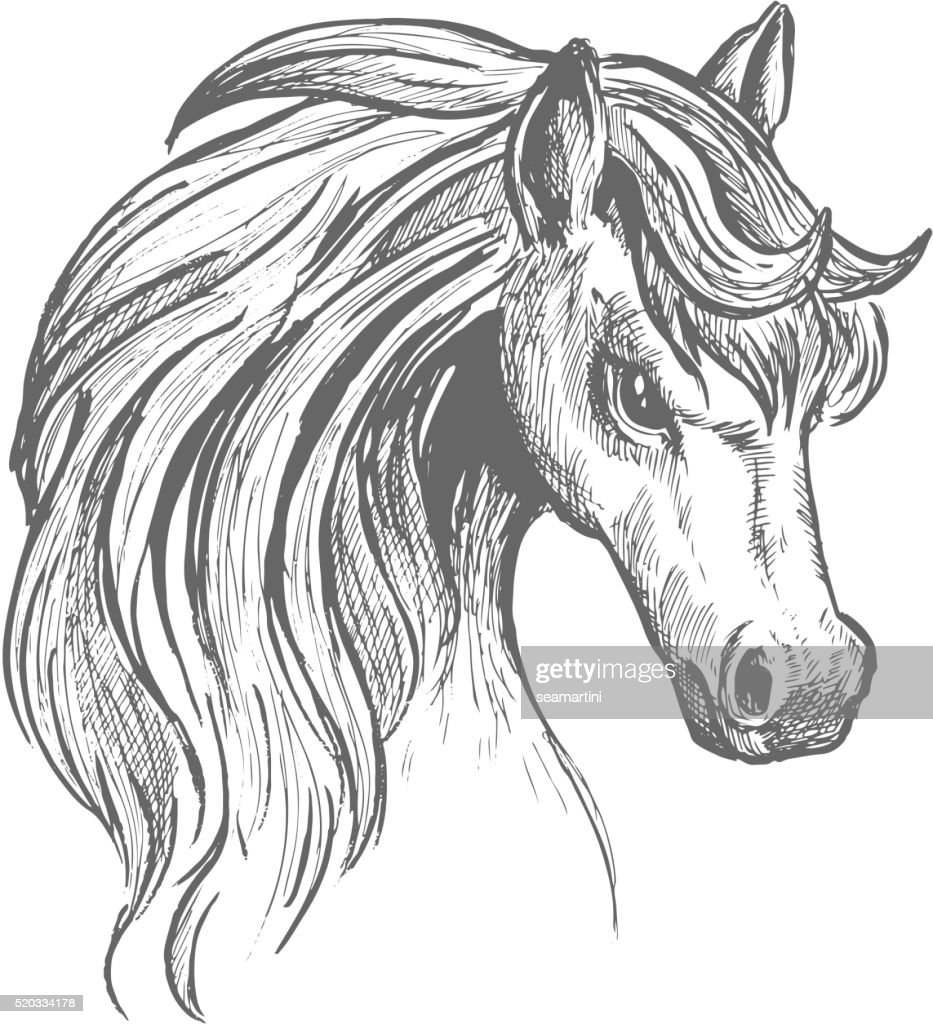 Head Of A Horse With Wavy Mane Sketch Symbol Vector Art Getty Images