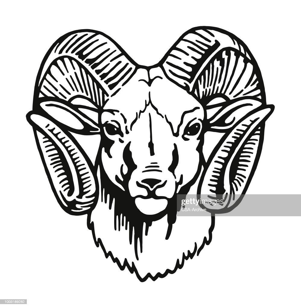 Head of a Ram : Stock Illustration