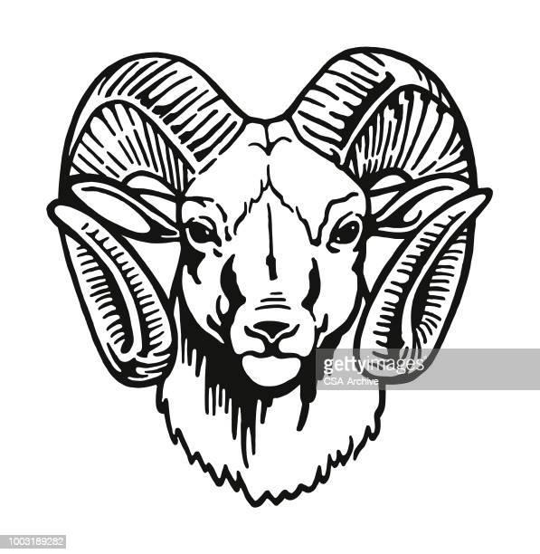 head of a ram - sheep stock illustrations, clip art, cartoons, & icons