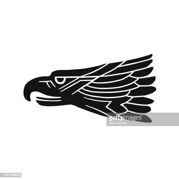 head of adler - adler stock-grafiken, -clipart, -cartoons und -symbole
