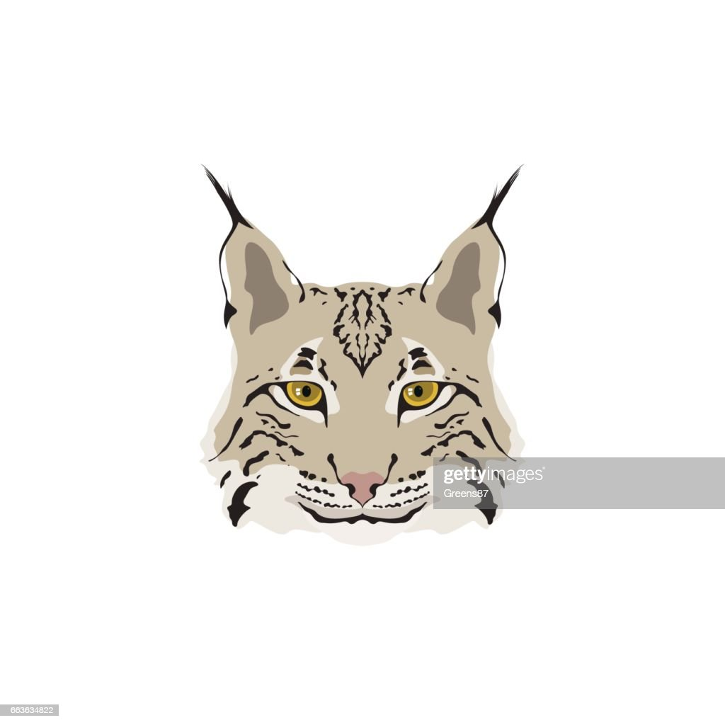 Head of lynx isolated on white background. Mascot symbol. Vector illustration.