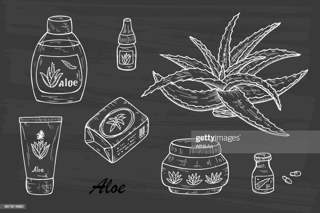 Health and beauty Vector set: Cosmetic bottles and packaging. Hand drawn Aloe cosmetics and Aloe Vera plant. Alternative medicine, treatment and body care with aloe ingredients. Vector illustration