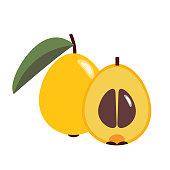 Healthy organic loquat medlar, colorful tropical nature fresh fruit objects.