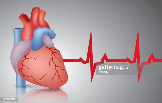 Coração e cardiogram