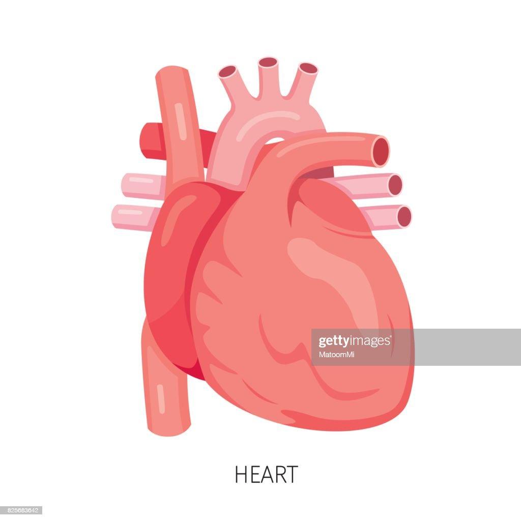 Herz Diagramm Der Menschlichen Inneren Organ Vektorgrafik | Getty Images