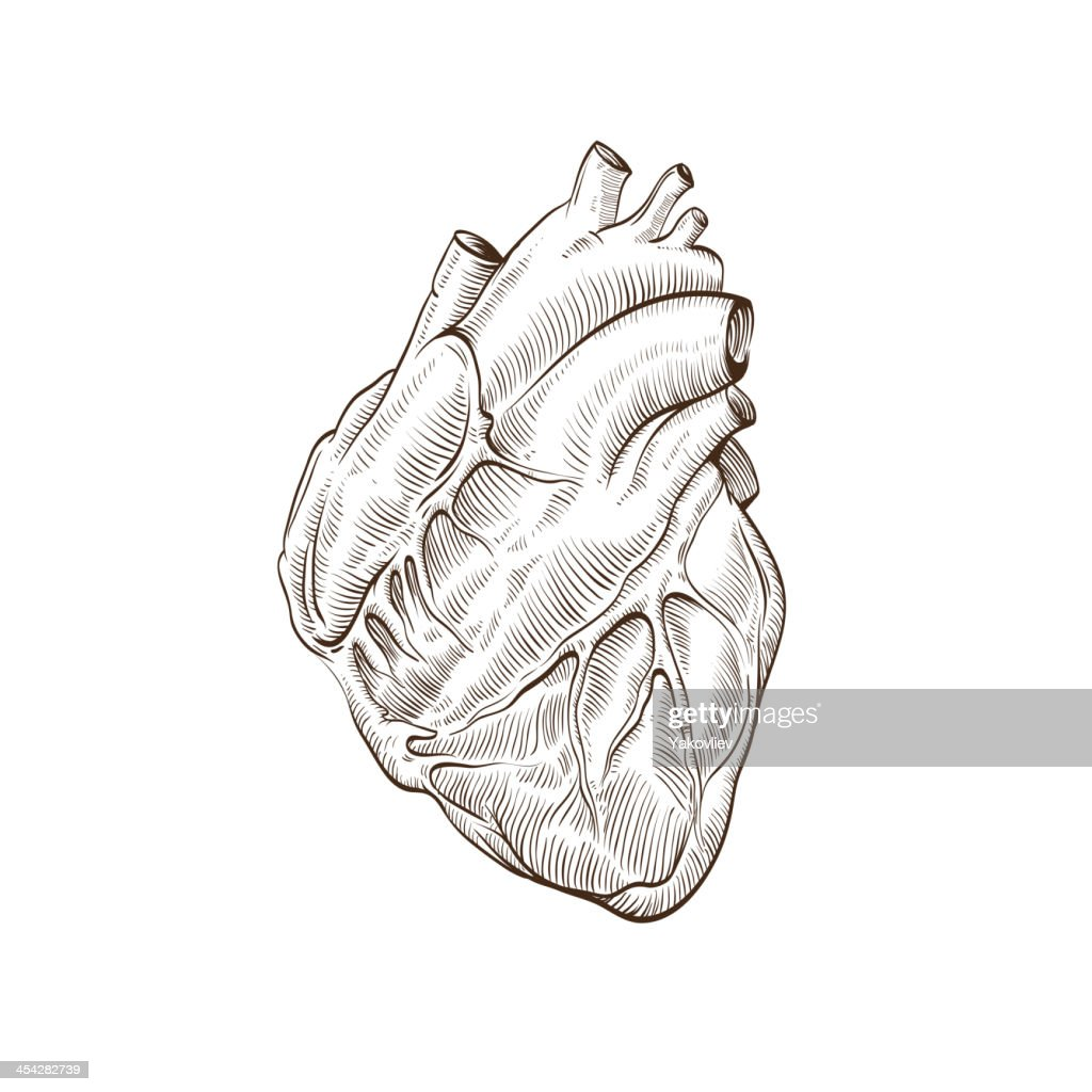 Heart isolated on a white backgrounds