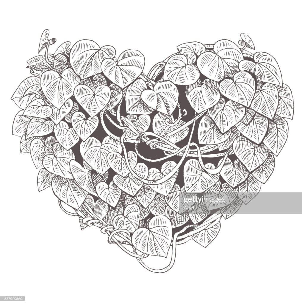 heart of the climbing plant with leaves. Valentine
