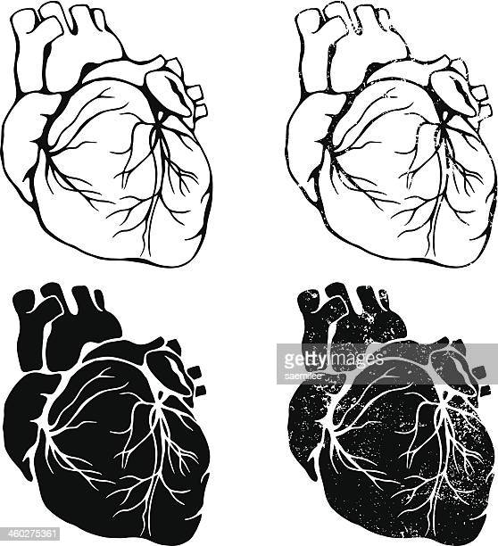 heart set - tissue anatomy stock illustrations, clip art, cartoons, & icons