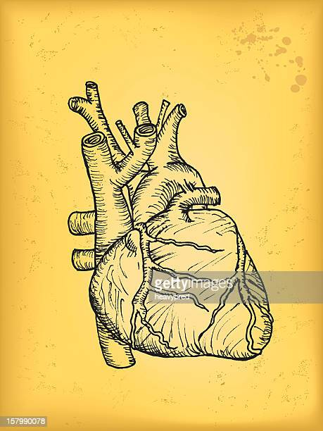 heart - myocardium stock illustrations, clip art, cartoons, & icons