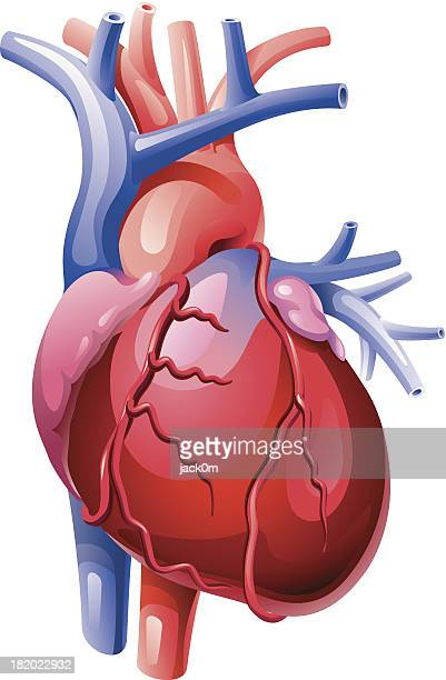 heart - coronary artery stock illustrations, clip art, cartoons, & icons