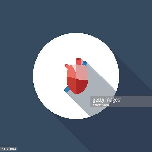 ilustraciones, imágenes clip art, dibujos animados e iconos de stock de corazón - cardiólogo