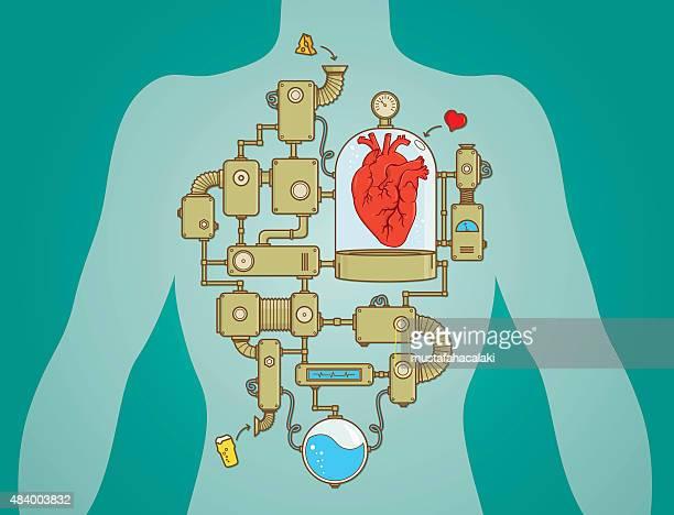 Heart working process as a machine