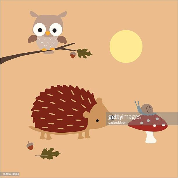 Hedgehog Meets A Snail