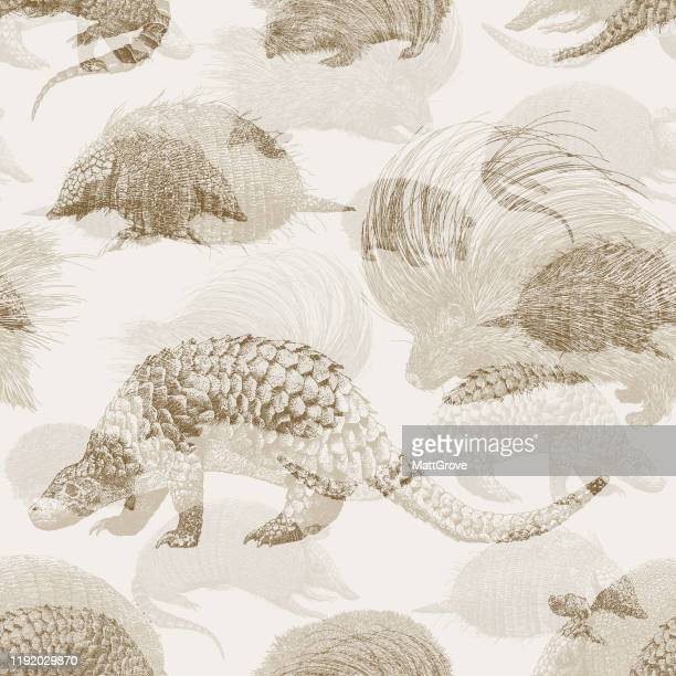 illustrations, cliparts, dessins animés et icônes de hedgehog porcupine pangolin armadillo répétition transparente - pangolin