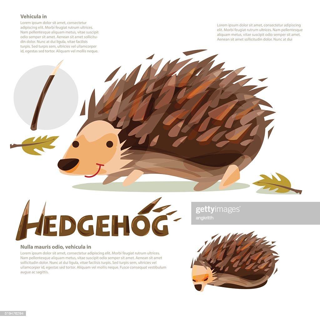 Hedgehog -vector illustation