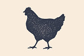Hen, chicken. Vintage logo, retro print, poster for Butchery