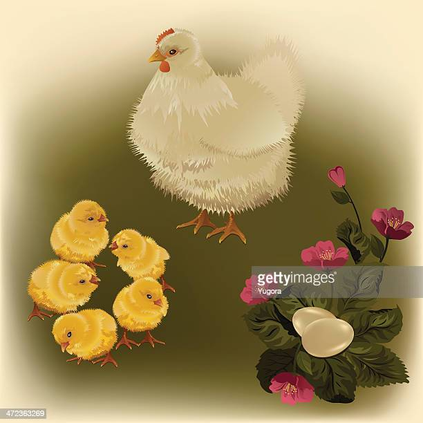 hen, chicks, eggs, flowers - life cycle stock illustrations