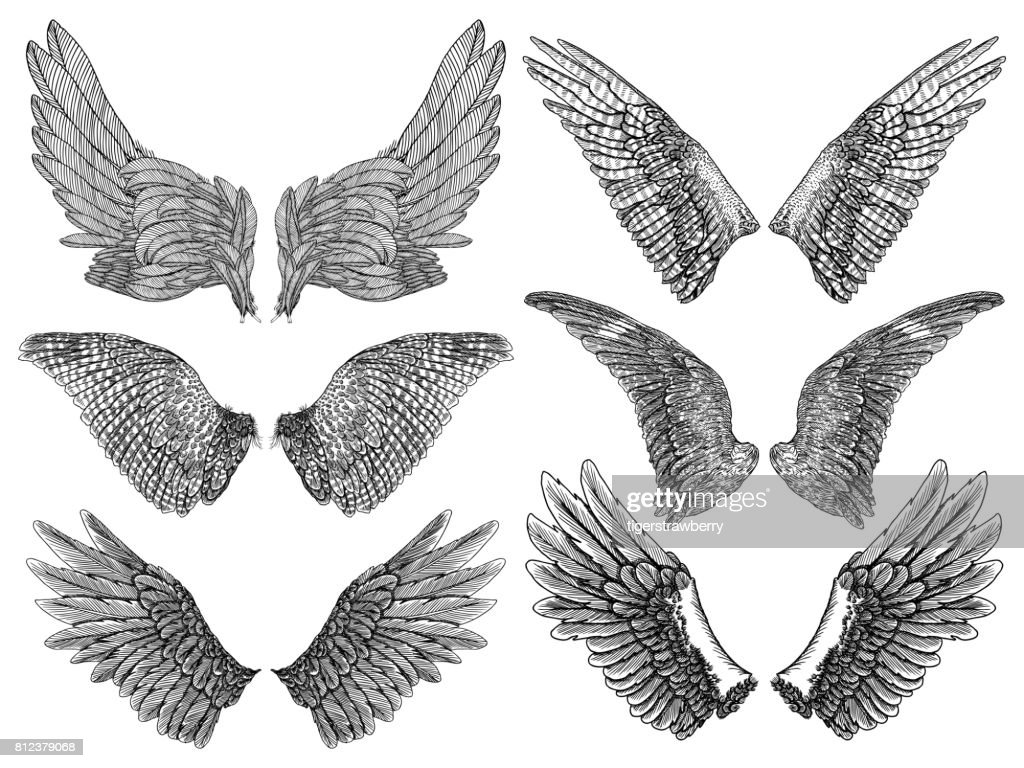 Heraldic wings set for tattoo and mascot design. Isolated vector illustration collection wings.