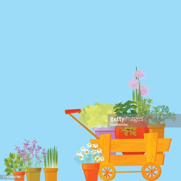 ilustraciones, imágenes clip art, dibujos animados e iconos de stock de fondo de hierbas - manzanilla